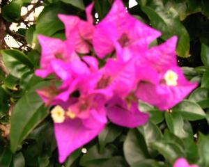 花びらか葉っぱ