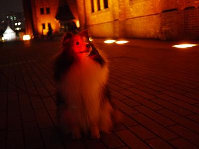 05横浜鎌倉の夜