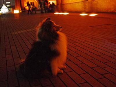 10横浜鎌倉の夜
