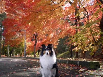 06公園の紅葉