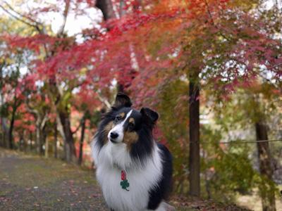 04公園の紅葉