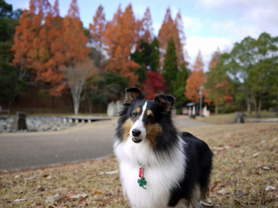 02公園の紅葉