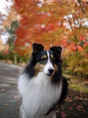 10公園の紅葉