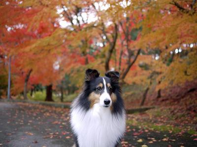 09公園の紅葉