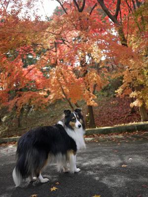07公園の紅葉