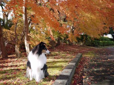 14公園の紅葉