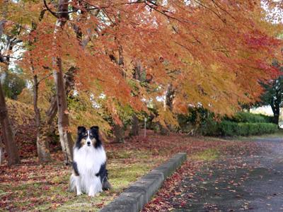 13公園の紅葉