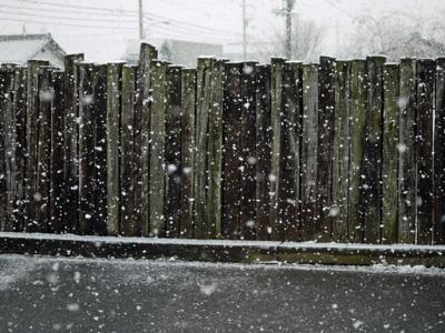 06雪の中パセリくん