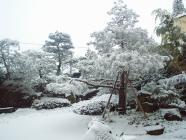 笊碁の会で上雪上田館H200123