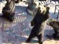 熊牧場爆笑熊