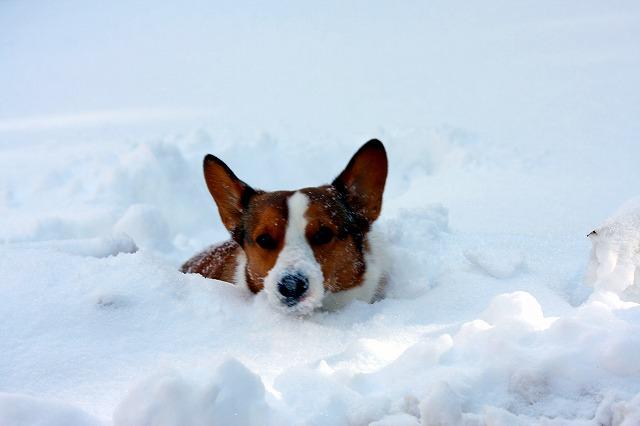 雪チタン2