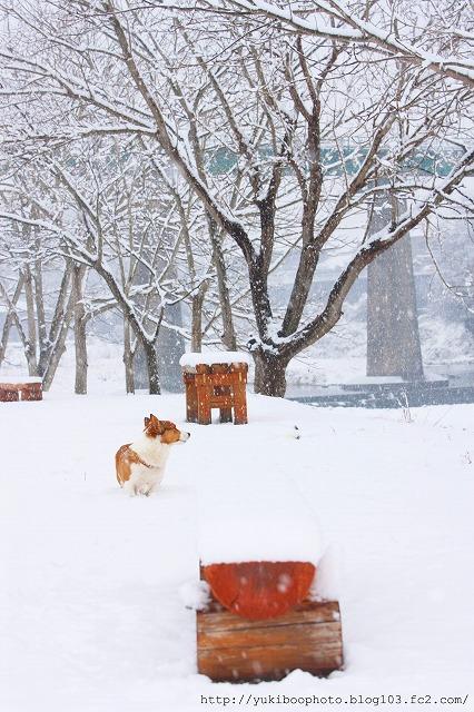 雪公園チタン1