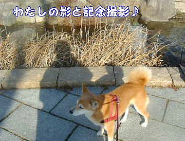 画像4 0061