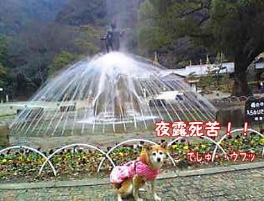 Image2601_20080108122520.jpg