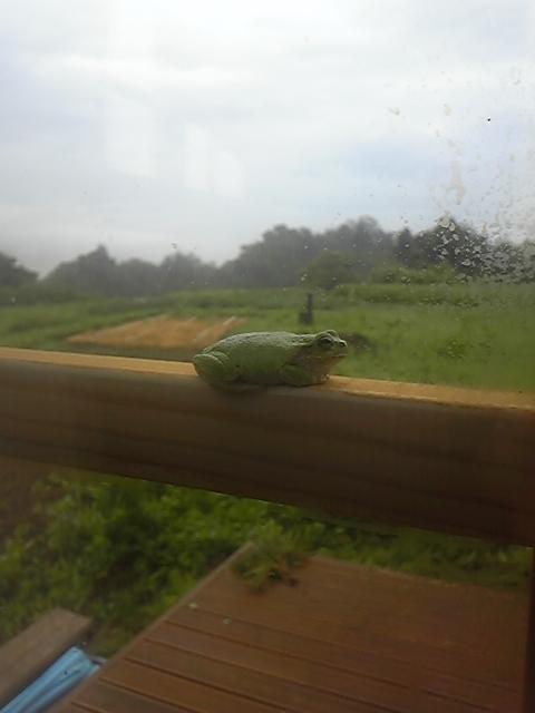 窓の桟に佇むカエルさん