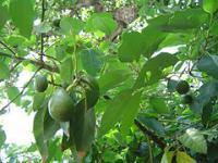 a_avocado.jpg