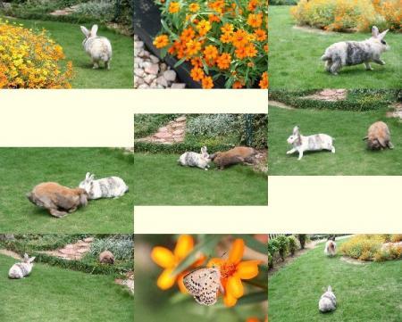 庭で遊ぶうさぎ