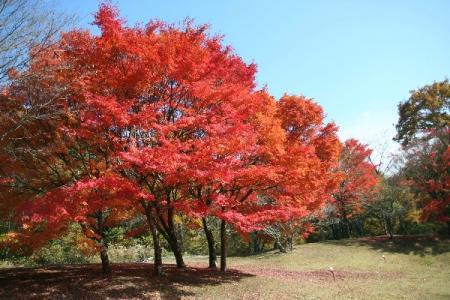 秋の帝釈峡