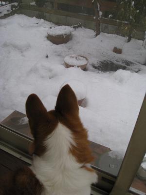 窓からの雪景色2.9