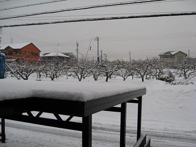雪の桃畑2.9