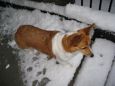 雪をみる2.9
