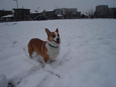 雪とヨッチ