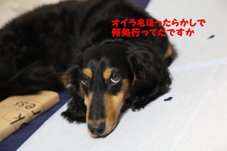 hanabi20110805-5.jpg