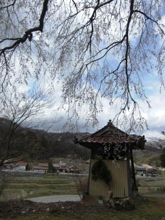 長源寺の桜-01