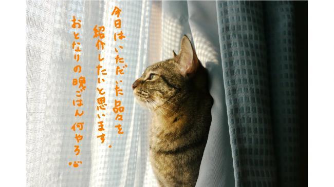 0006_convert_20110820000747.jpg