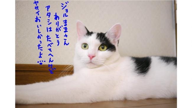 0022_convert_20110820020244.jpg
