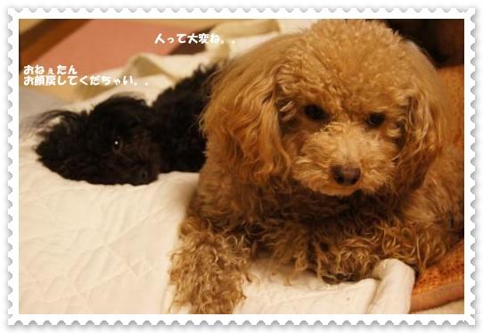 20110331yuzukosyo3k.jpg