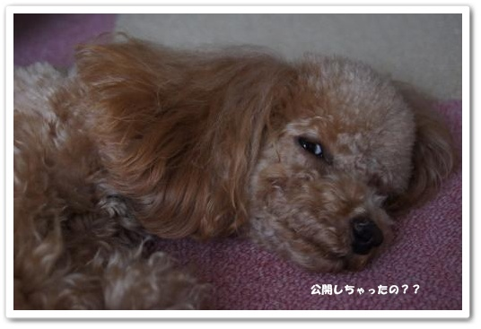 20110418yuzu3k.jpg
