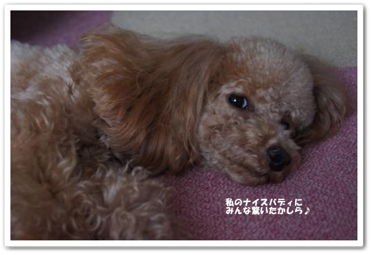 20110418yuzu5k.jpg