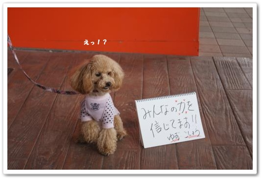 20110429yuzu1k.jpg