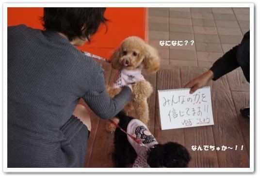20110429yuzukosyo1k.jpg