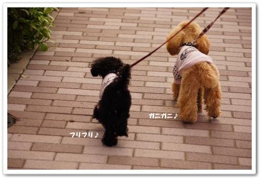 20110429yuzukosyo3k.jpg