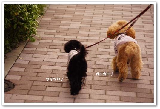 20110429yuzukosyo4k.jpg