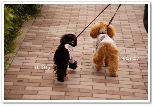 20110429yuzukosyo5k.jpg