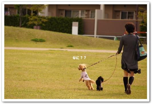 20110430yuzukosyo3k.jpg