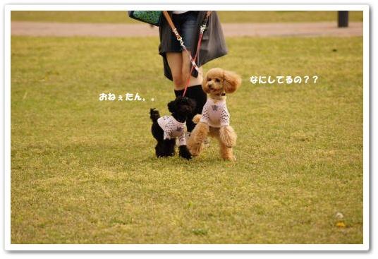 20110430yuzukosyo4k.jpg