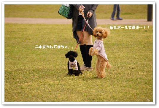 20110430yuzukosyo5k.jpg