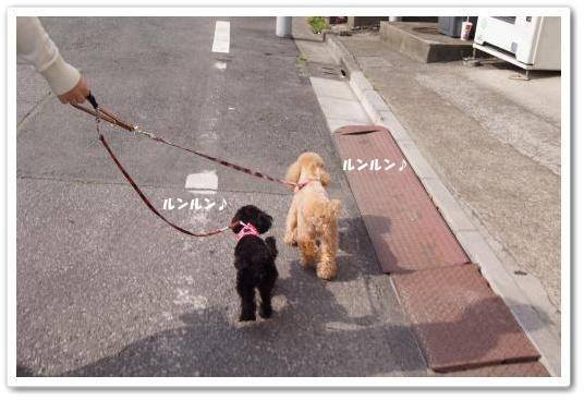 20110502yuzukosyo1k.jpg