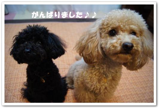 20110502yuzukosyo4kk.jpg