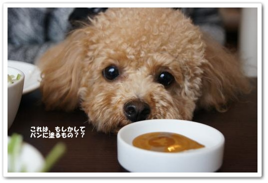 20110508yuzu3k.jpg
