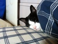 ひめ寝起き