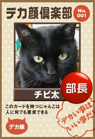 chibita_20110929212619.jpg