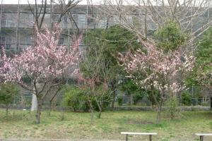 春が来た1