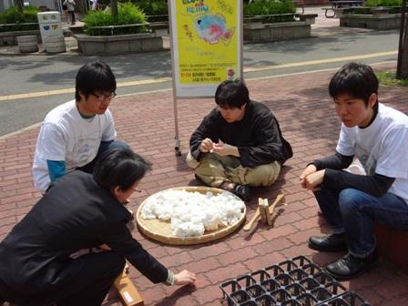学内で河内木綿の種植えと勧誘活動