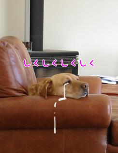 OchikomiChloe