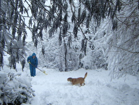 雪かきにじゃれる犬